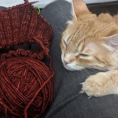 kitteninyarn
